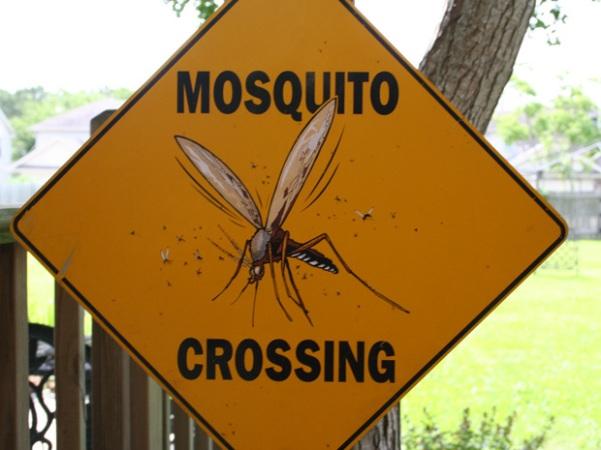 21sep-news-p9-mosquito